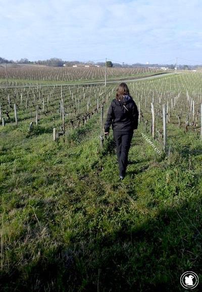 Randonnée de Fronsac à travers les vignes