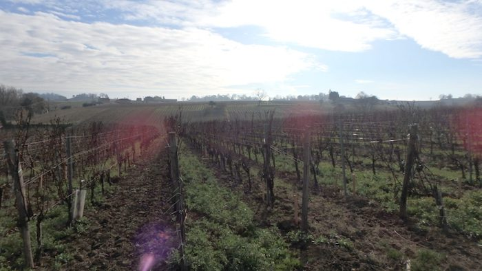 Le 45ème parallèle, latitude idéale des grands vins. Ici dans le bordelais.