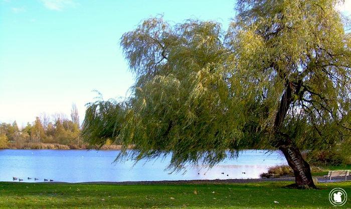 John Hendry Park, Vancouver