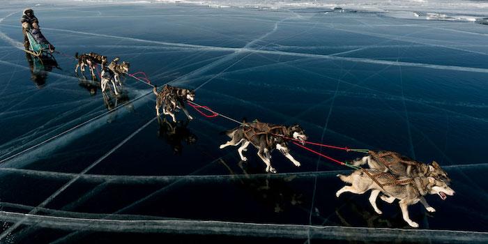 Nicolas Vanier, expédition l'Odyssée Sauvage avec ses chiens de traîneau