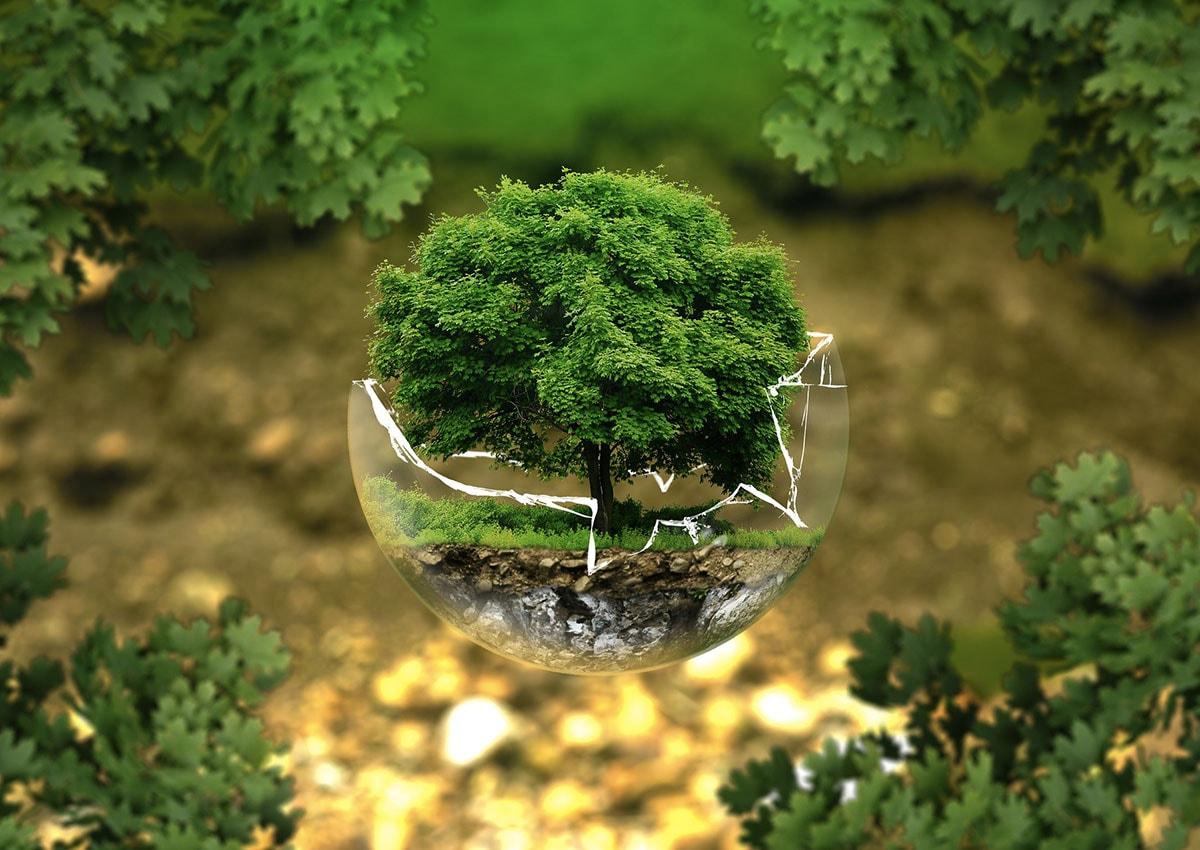 Comment prendre soin de notre planète et de ses habitants ?