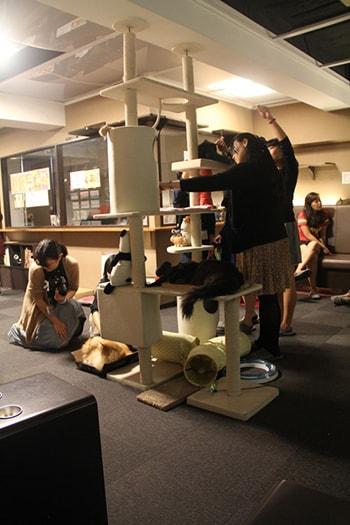 Bar à chat ou Neko cafe Tokyo