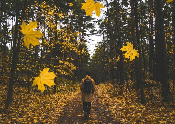Ou partir en automne