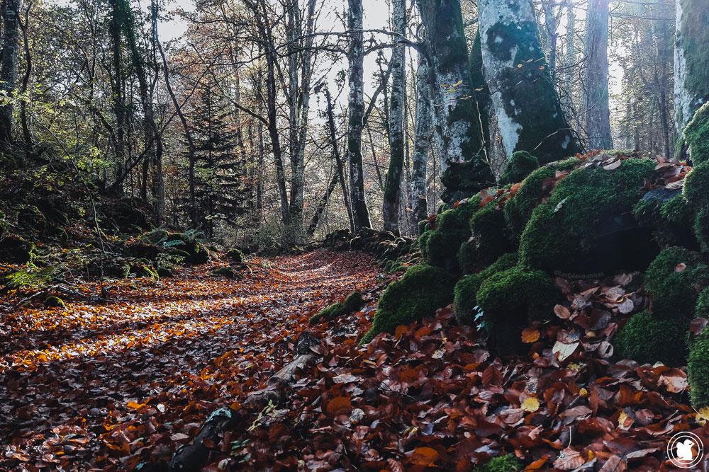 La boucle des dômes, chemin de forêt