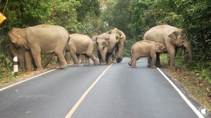 Elephants de Khao Yai, Thaïlande