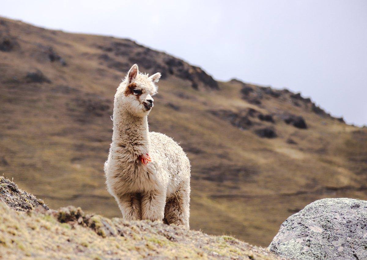 8 randonnées à faire en Amérique Latine