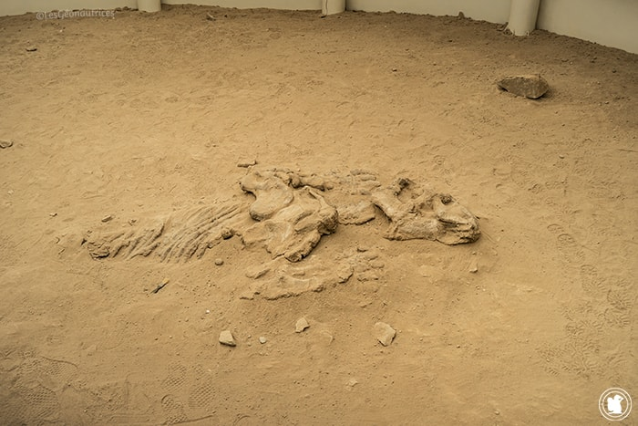 Dinosaure Parc provincial Ischigualasto