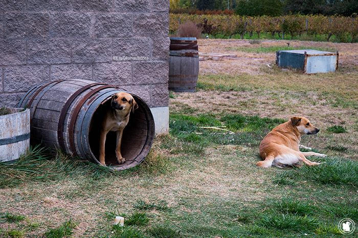 Visite de la bodega Dolium à Mendoza, en Argentine