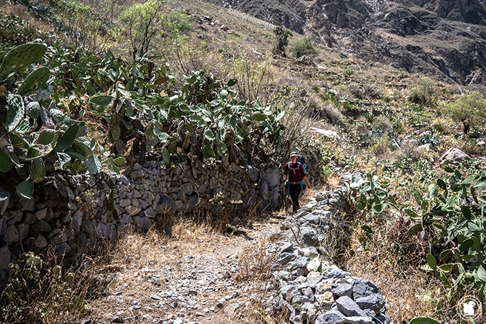 En marche vers Llatica dans le Canyon de Colca