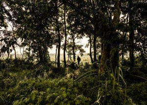 Itinéraire de 10 jours au Népal, quoi faire ?