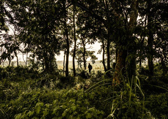 Nepal parc national Chitwan