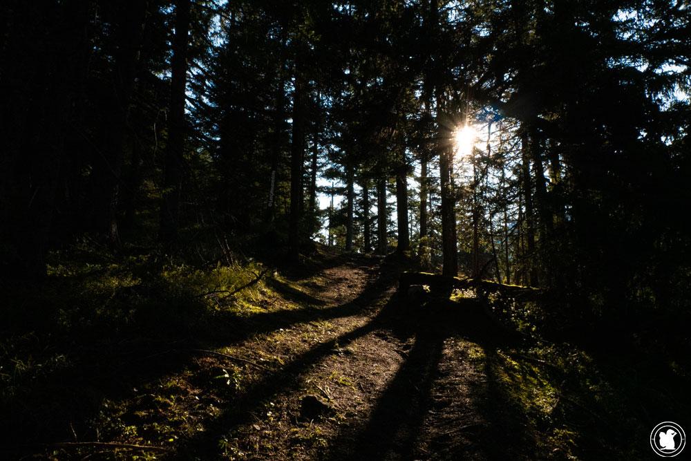 Forêt du Mont de l'Arpille au matin