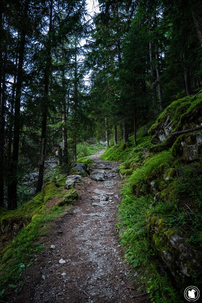 Forêt de Vallorcine au col des Posettes