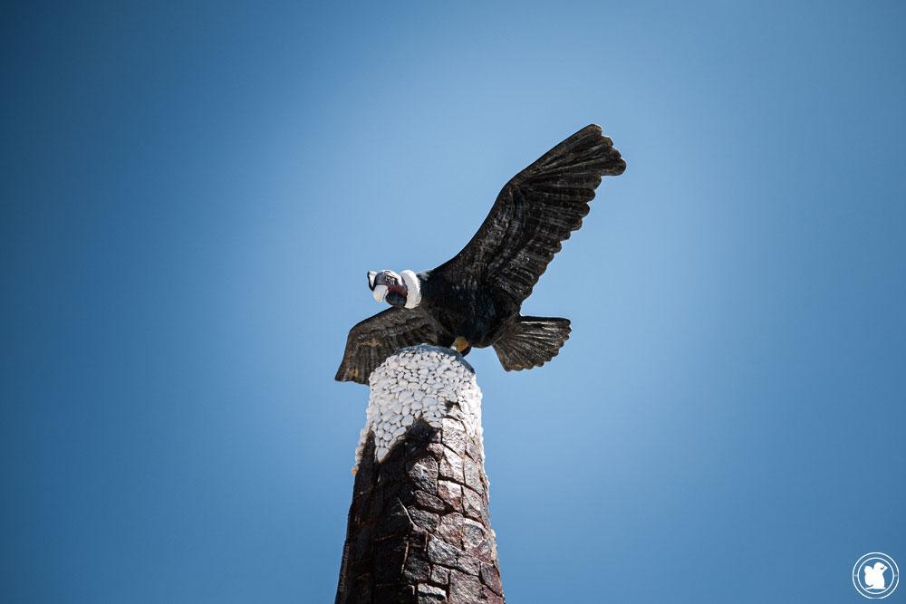 Condor Cabanaconde Canyon de Colca