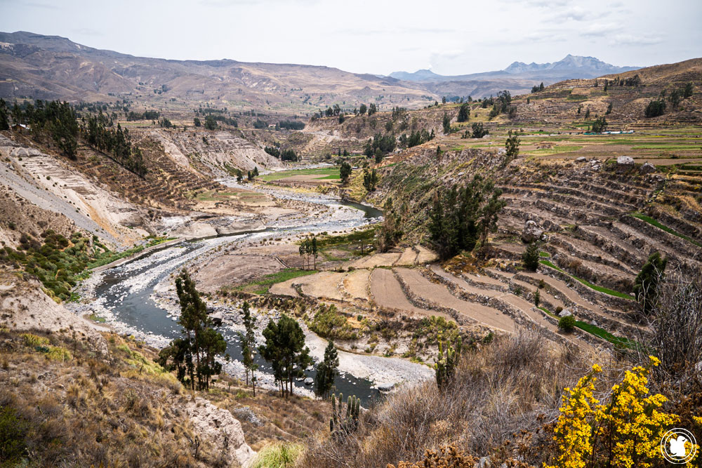 Rio Colca à Yanque Canyon de Colca