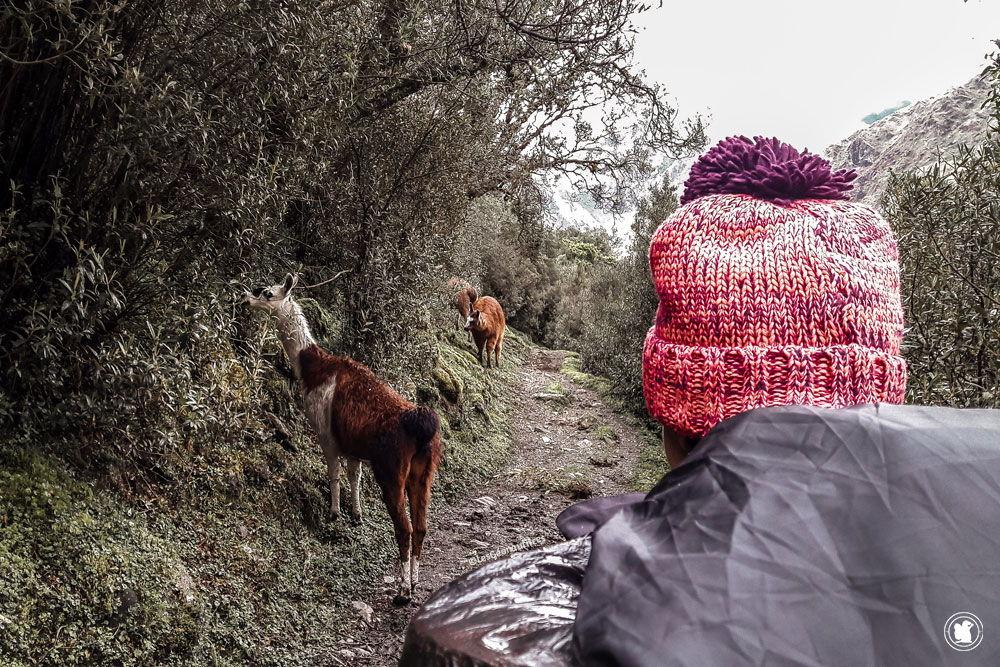Trek Santa Cruz en autonomie, nous n'étions pas seules sur les sentiers.