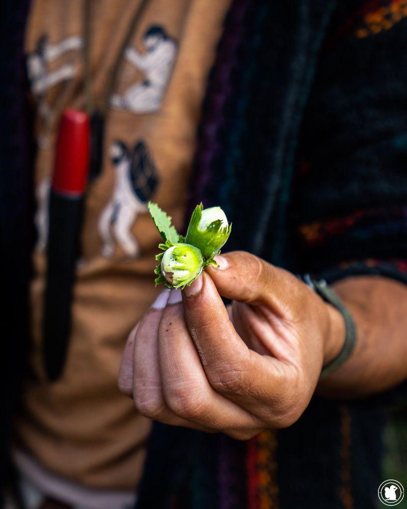 Stage de survie - noisettes, plantes sauvages comestibles